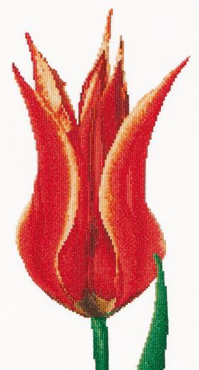 Tulipe Fleur De Lys Rougejaune Aida De Thea Gouverneur Fleurs